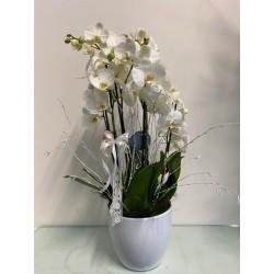 Composizione di orchidee - 1