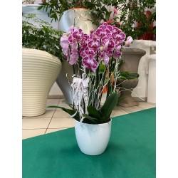 Composizione di orchidee - 2